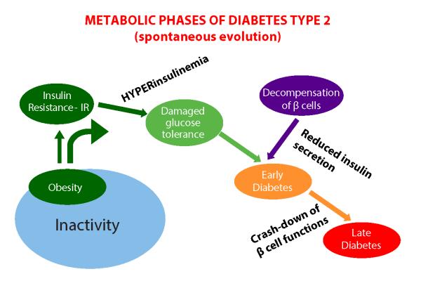 metabolic_phases_diabetes_type2