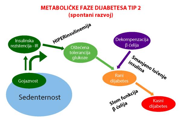 metabolice_faze_dijabetesa_tip2